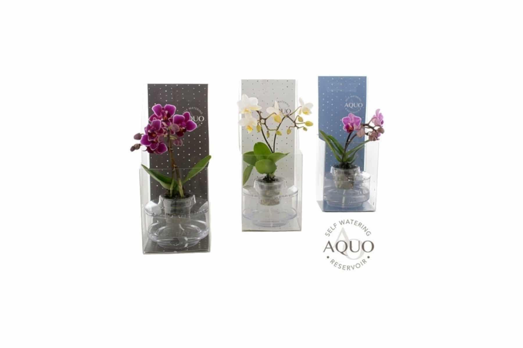 plastic-vouwdoosjes-orchidee